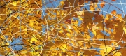 3_Autumn_Leaves_Triptych_2008