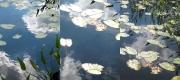 9_Lilies_triptych_2011